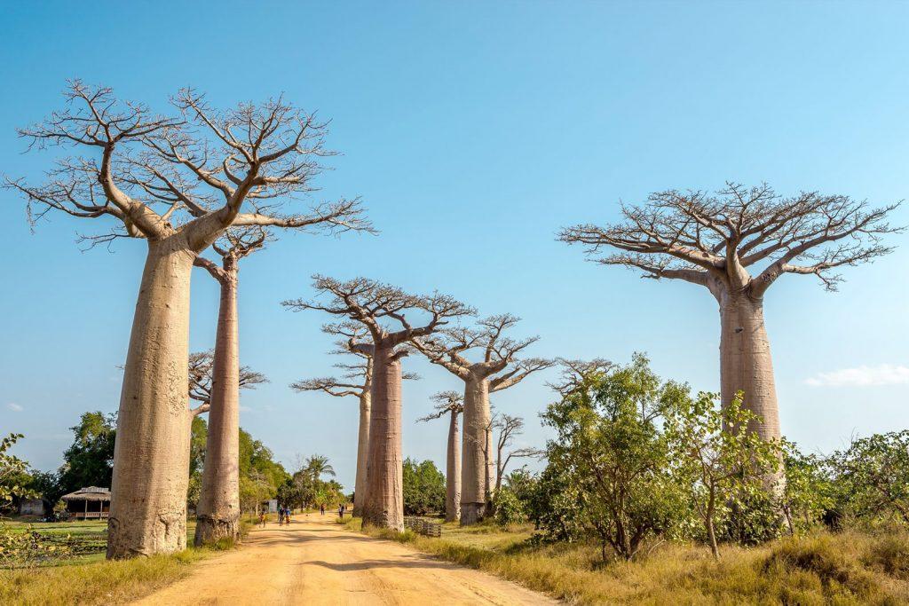 Нужно ли делать визу для поездки на Мадагаскар?