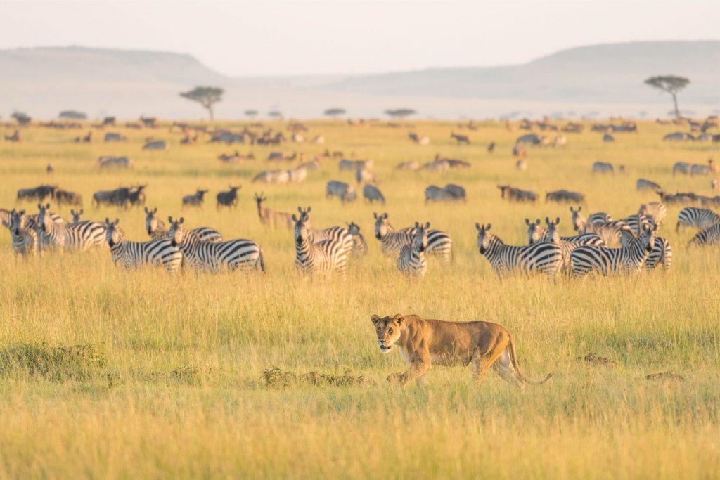 Нужно ли делать визу для поездки в Танзанию?