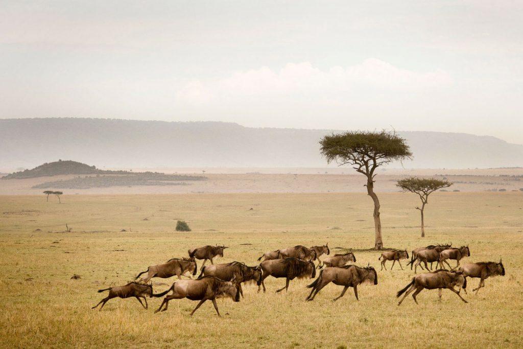 Нужна ли виза в Танзанию?
